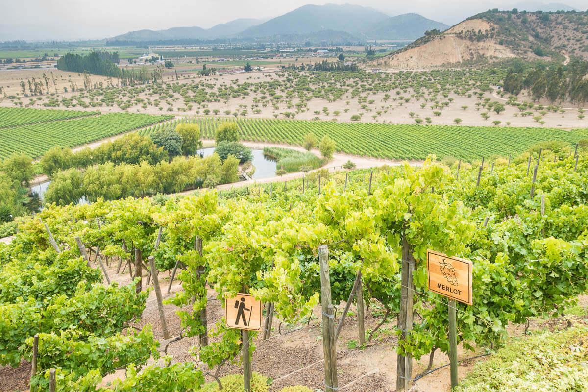 Wijnvelden van Quintay estate